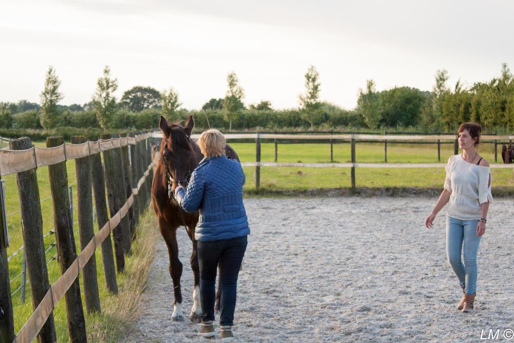 Priveles-dorine-erkens-guasha-therapie-paarden