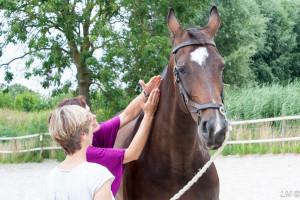 les-longeren-dorine-erkens-guasha-therapie-paarden